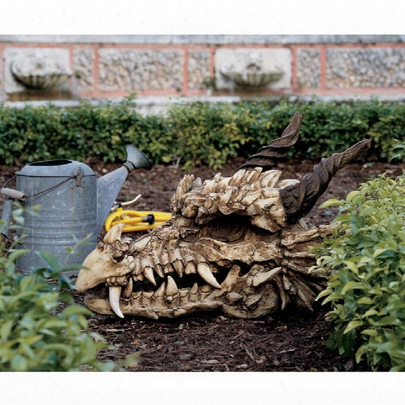 Stoker's Moors Dragon Skull Sculpture: Large