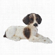 Brown & White Pointer Puppy Dog Statue