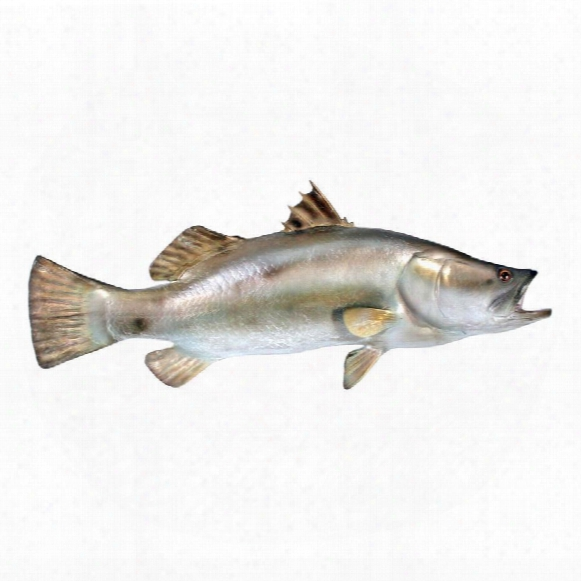 "Barramundi"" Wall Mount Trophy Sculpture"