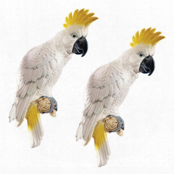 Sulphur-crested Cockatoo Wall Sculpture: Set Of Two