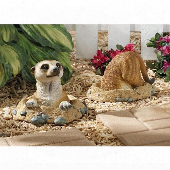 Kalahari Meerkat Statue: Into Hole & Out Of Hole