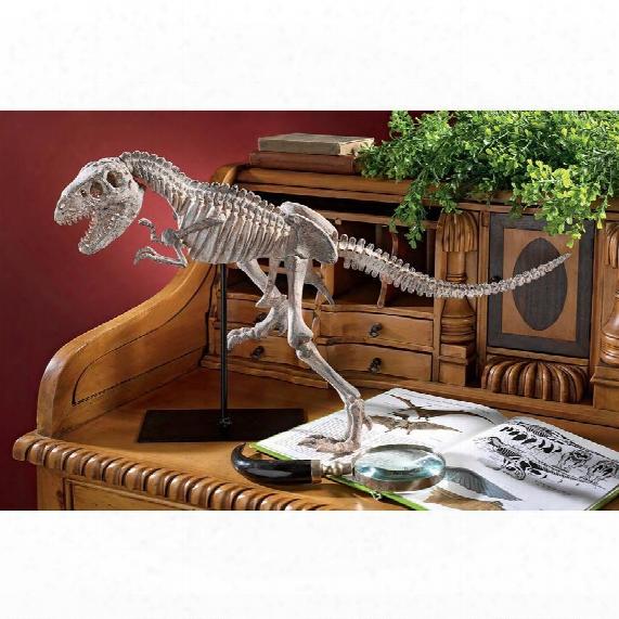 Scaled Tyrannosaurus Rex Skeleton Statue