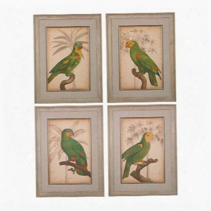 "Parrot And Palm Collection 151-018/s4 Set Of 4 26"" Wall Art With Fine Art Giclee Glass Covering Satin Matte Paper Print And Wood Frame In Washed Wood"