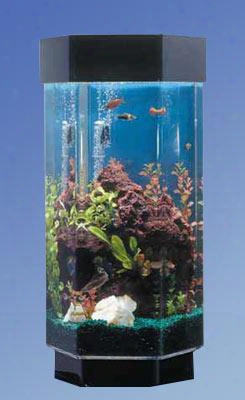 "Tt1500 31"" High Aquascape 15 Gallon Hexagon"