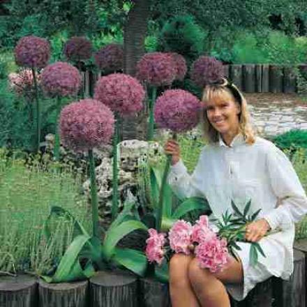 Allium, Giant