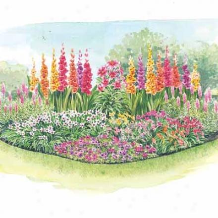 Bulb Garden, 50 Piece