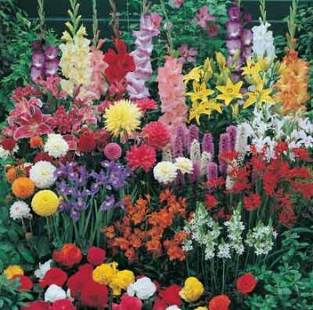 Bulb Garden, Sensational Summer
