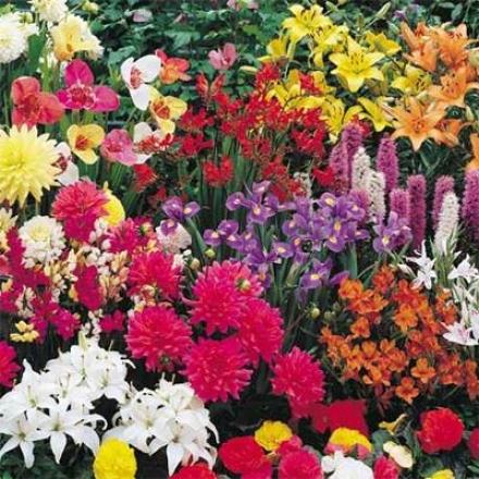 Bulb Garden, Summer Rainbow