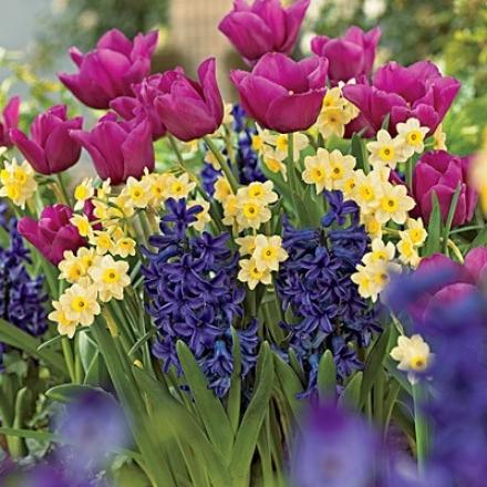 Bulb Garden, Vibrant