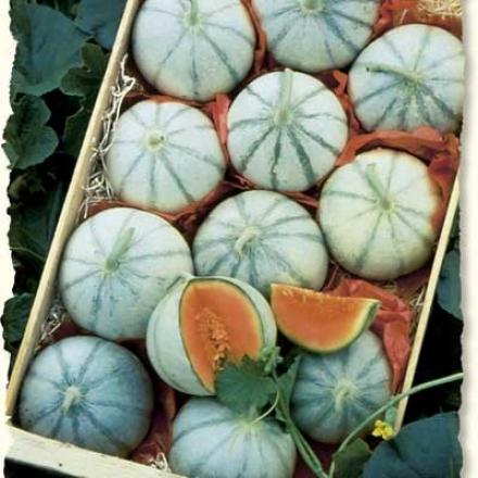 Cantaloupe, Savor