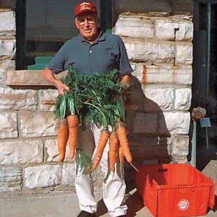 Carrot, Envy