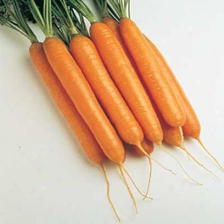 Carrot, Sweetness Ii Hybrid