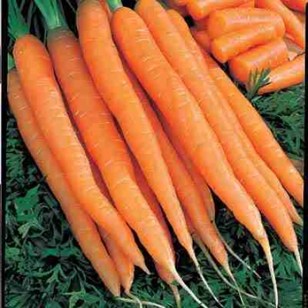 Carrot, Tendersweet