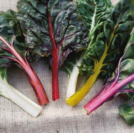 Chard, Northern Lights