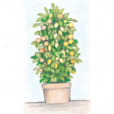 Citrus, 3-n-1