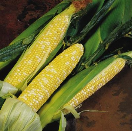 Corn, Delectable