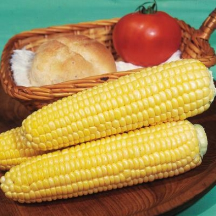 Corn, Earlivee Sweet
