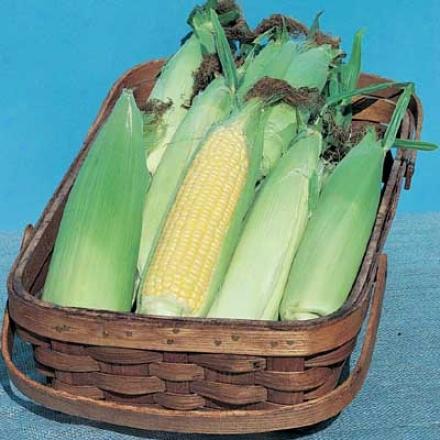Corn, Jubilee Sweet