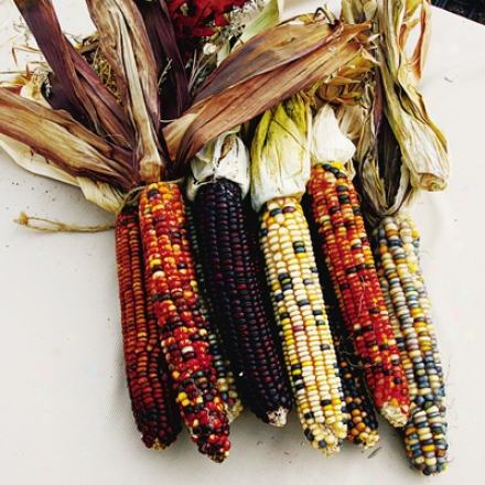 Corn, Embellishing Indian Rainbow