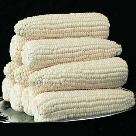 Corn, Silver Queen Hybrid Sweet