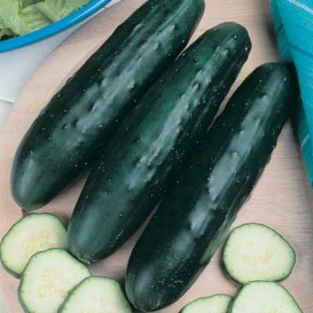 Cucumber, Fanfare
