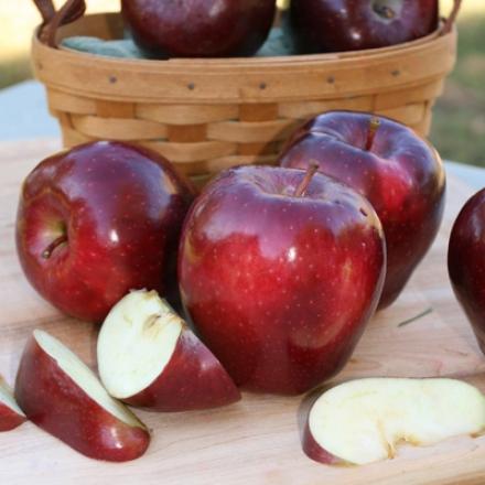 Dwarf Red Pleasant Apple
