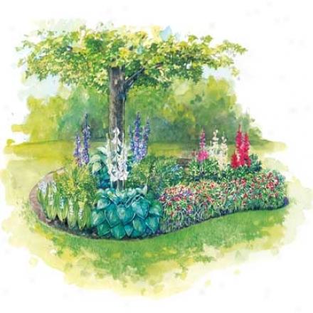 Garden, Color In The Shade