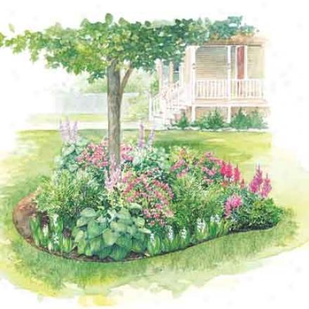 Garden, Perennial Shade