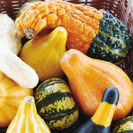 Gourd, Ornamental