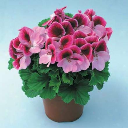 Houswplant Sampler