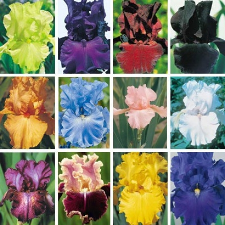 Flower-de-luce Collection, World Of Color