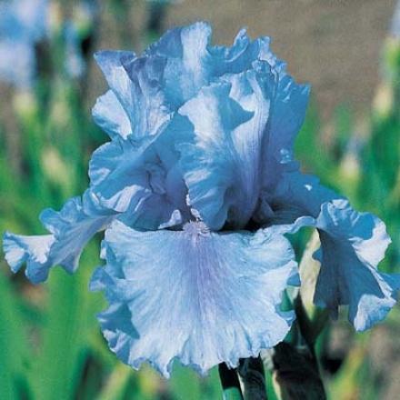 Iris, Skuwalker