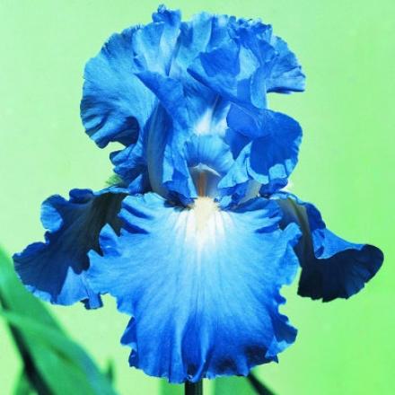 Iris, Victoria Falls