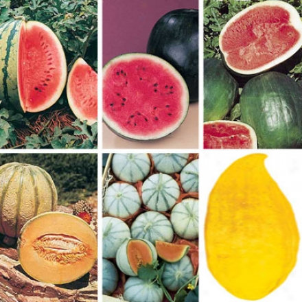 Melon Collection, Combination