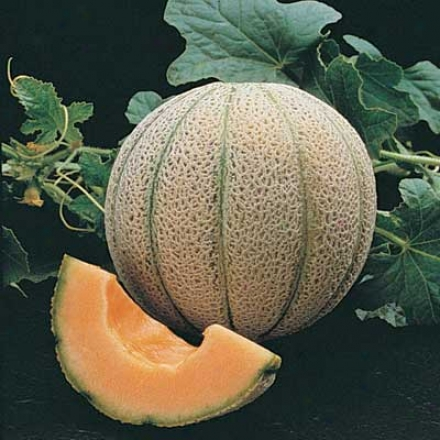 Muskmelon, Magnifisweet