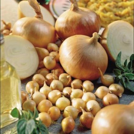Onion, Stuttgarter