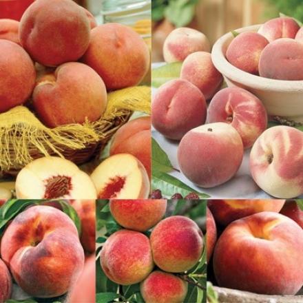 Peach, 5-n-1