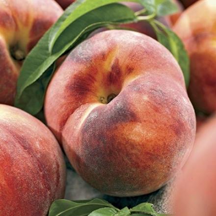 Peach, Dwarf Red Haven