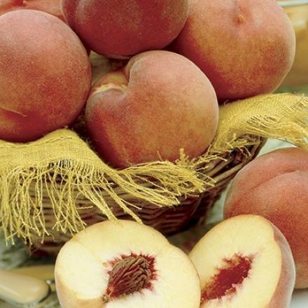 Peach, Standard Elberta