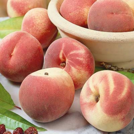 Peach, Standard Red Haven