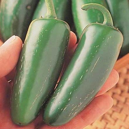 Pepper, Mucho Nacho Jalapeno