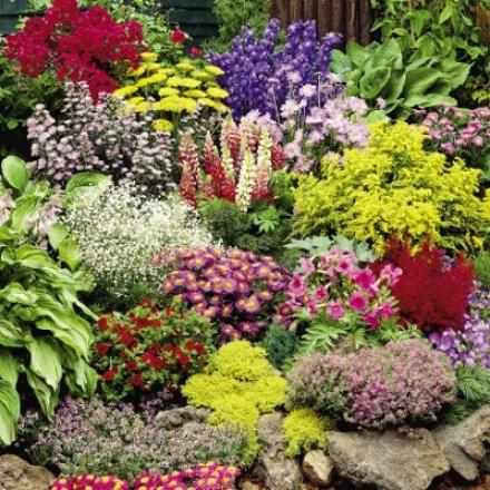 Perennial Bargaln