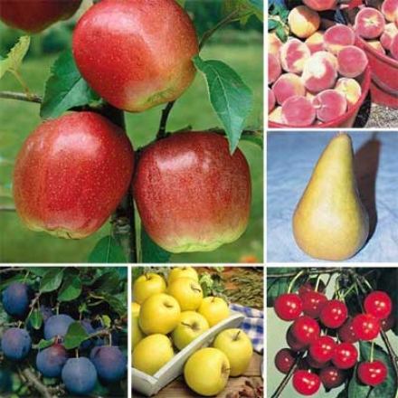 Postage Stamp Orchard