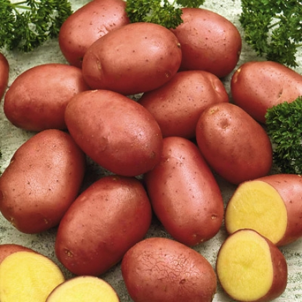 Potato, Red Pontiac