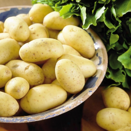 Potato, Yukon Gold
