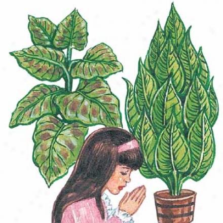 Prayer Plant, Mystifying