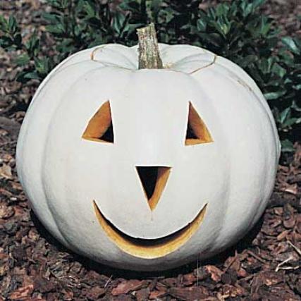 Pumpkin, Lumina Pvp