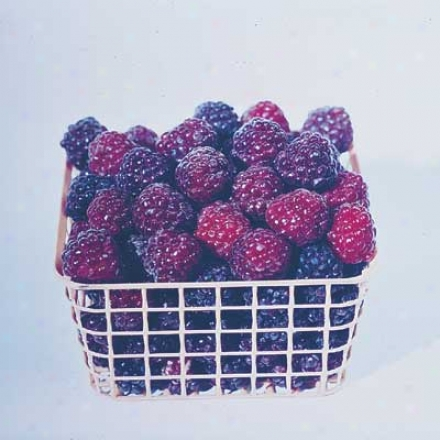 Raspberry, Brandywine