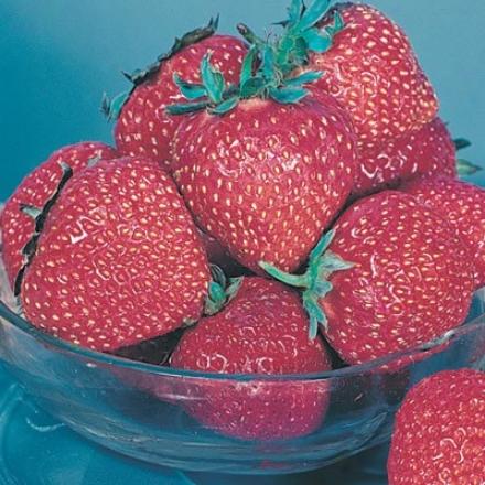 Strawberry, Honeoye