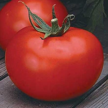 Tomato, Better Boy Hybrid